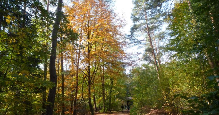 Fußgängerunterführung vom Großostheimer Unterwald /Bannwald) zum Hübnerwald in Stockstadt